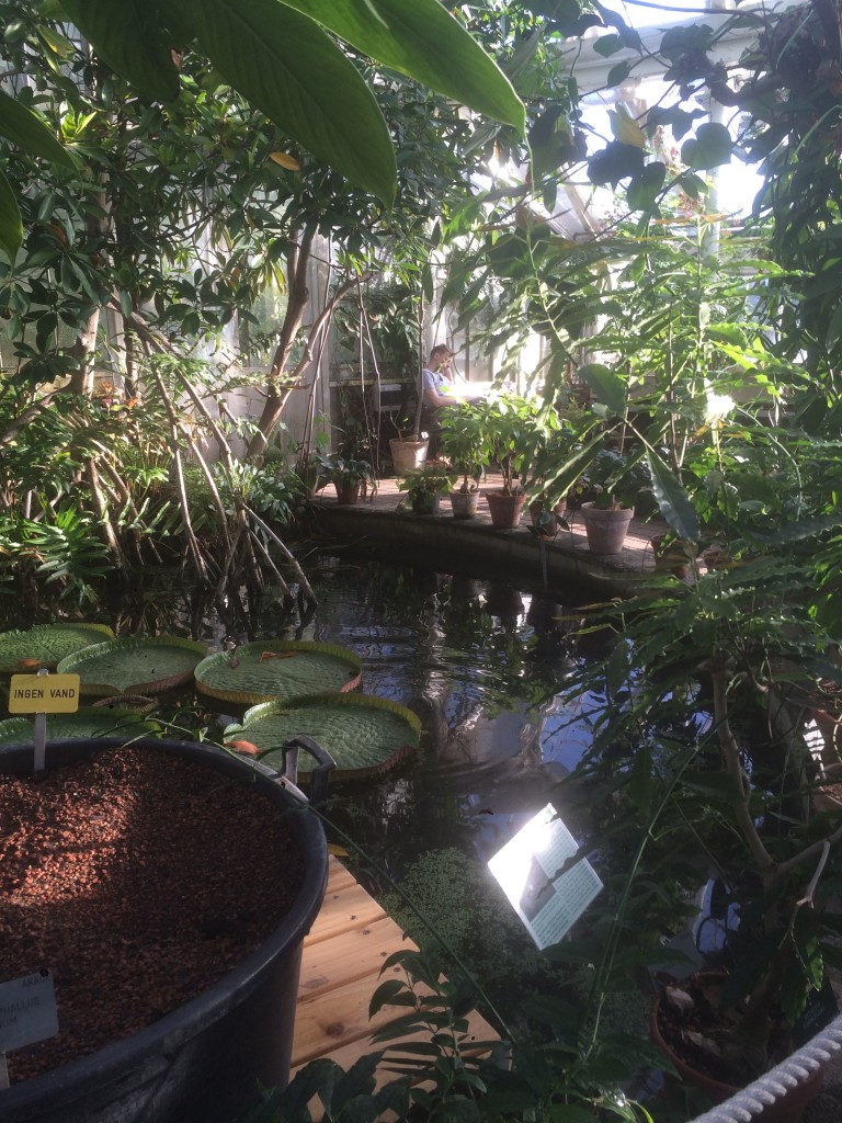 copenaghen giardino botanico