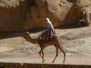 Trassporti in Egitto