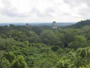 Tikal vista dall'alto delle sue piramidi