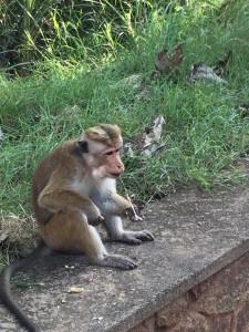 Scimmia con sperma