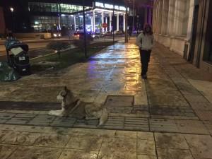 Punta Arenas racconto - I cani della città