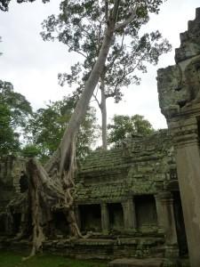 Cambogia Angkor - Il Ta Prohn