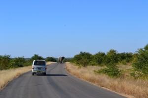 Alla ricerca dei Big Five al Kruger Park
