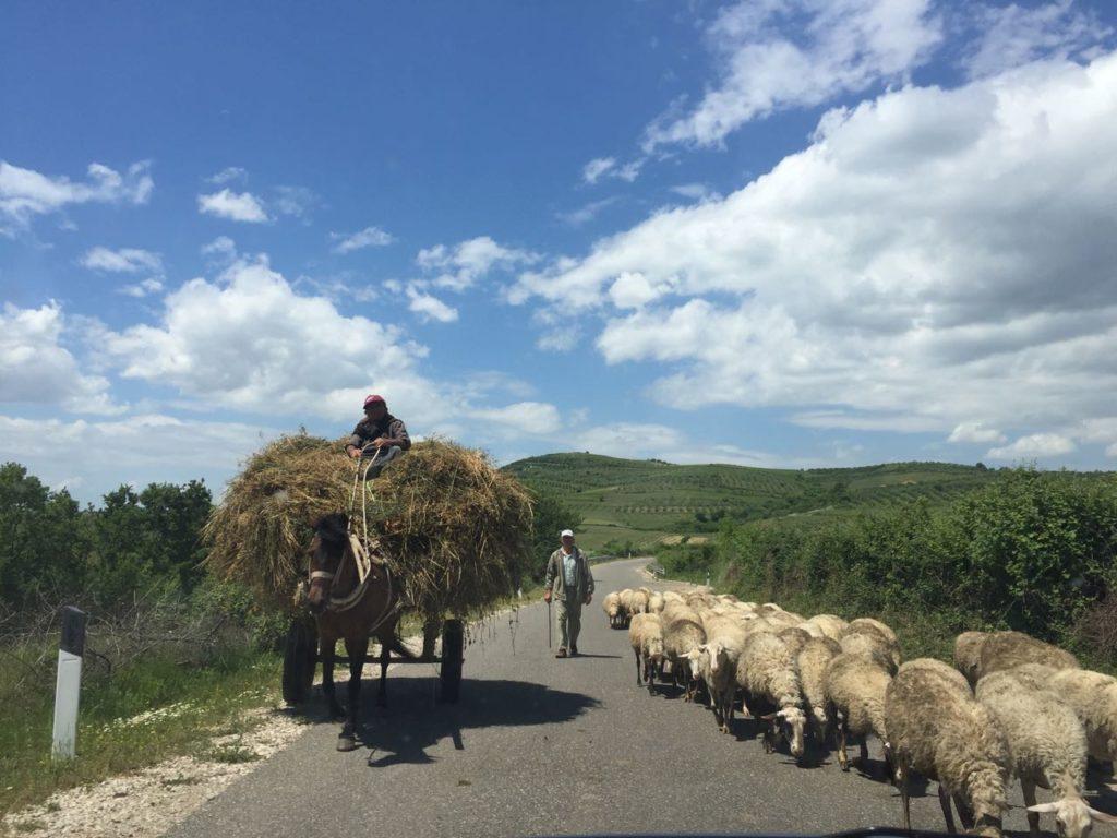 Albania noleggio auto