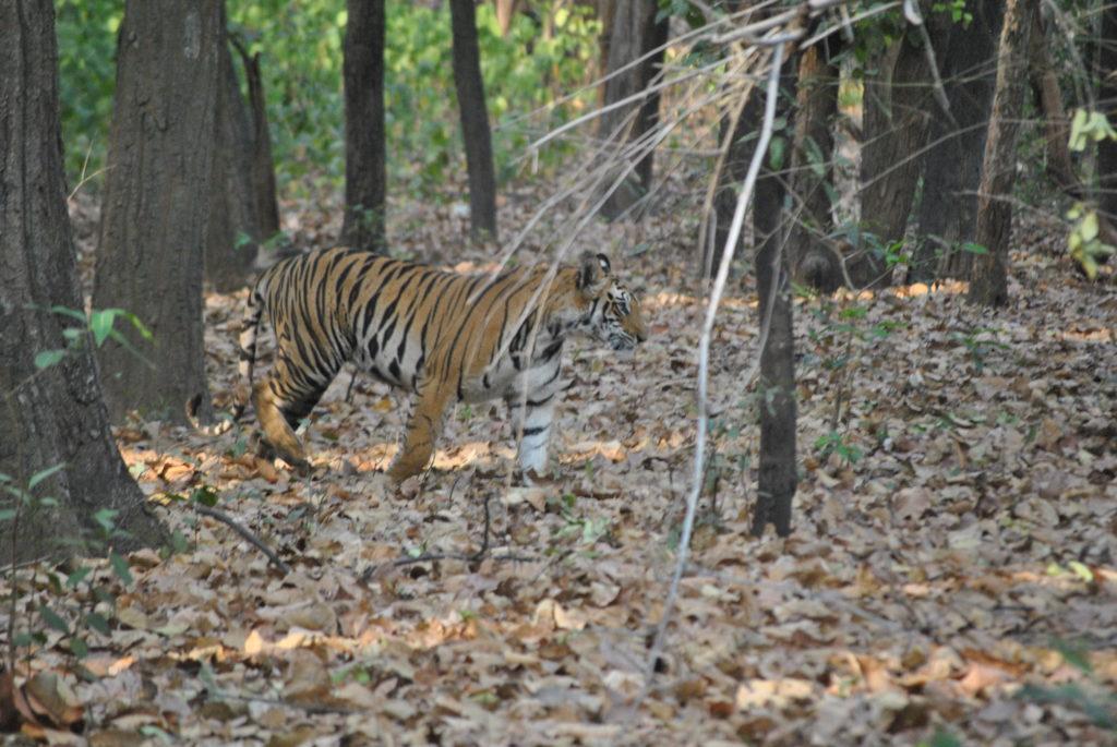 Bandhavgarh National Park, Madhya Pradesh - foto di Vanessa Marenco
